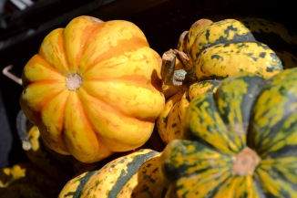 colorful acorn squash RRF