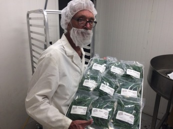 green beans bagged and sealed - 24 of 32