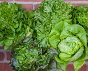 Lettuce dream lettuce