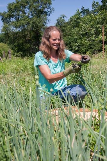 Red Ridge Farm - Ami onion field3