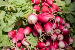 Red Ridge Farm - radishes2